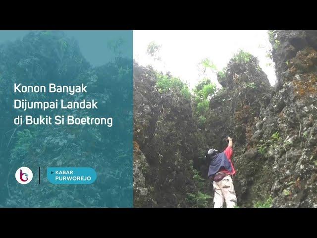 Konon Banyak Dijumpai Landak di Bukit Si Boetrong
