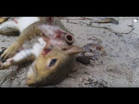 【閲覧注意】リスの死体から出る寄生虫がおぞましい・・ - YouTube