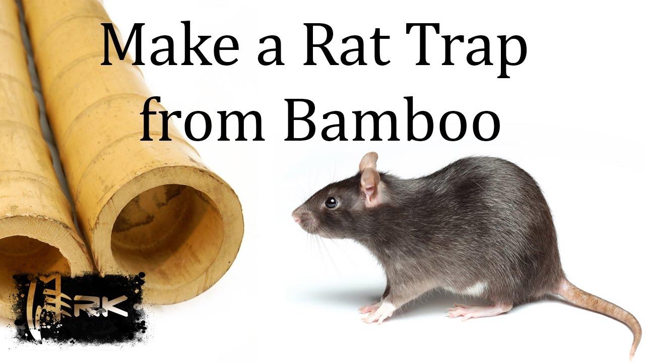 How to make a bamboo rat trap tilong youtube