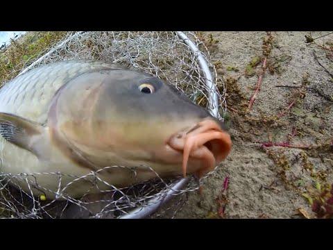 река белая адыгея рыбалка