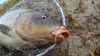 Рекордная рыбалка на снасть убийца карася(соска)(, 2015-10-12T04:40:18.000Z)