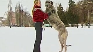 10 Самых Больших Пород Собак