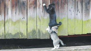Котята резвятся после обеда в ресторане