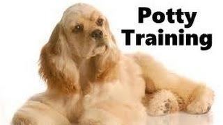 How To Potty Train A Cocker Spaniel Puppy - Cocker Spaniel Training Tips - Cocker Spaniel Puppies