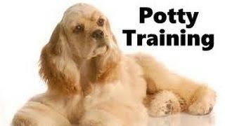 How To Potty Train A Cocker Spaniel Puppy - Cocker Spaniel Training Tips - Cocker Spaniel Puppies