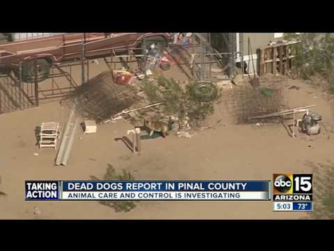 Pinal County investigating after dead dogs found on Maricopa property
