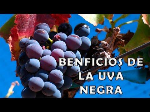 Uva Negra Beneficios y Propiedades para la Salud  - Propiedades Curativas de la Uva Negra