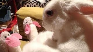 If you MANAGE NOT TO LAUGH you deserve A PRIZE - Funny ANIMAL compilation