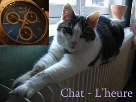 Les chats rigolos youtube - Dessins de chats rigolos ...