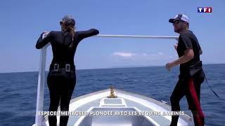 Extrait du JT  TF1 20h du 27/05/18 - Les Baleines Rand'eau et le Madagascar Whale Shark Project