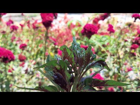 taman-bunga-matahari-bekasi-akan-reinkarnasi