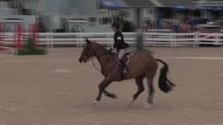 Video of CASPER VAN'T GESTELHOF ridden by ELIZABETH MCKIM from ShowNet!