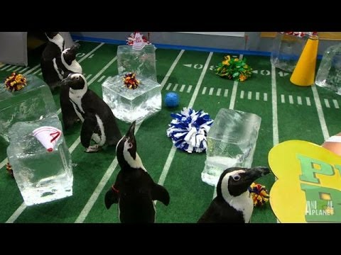 The Penguins March | Puppy Bowl X