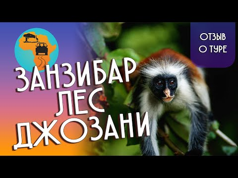 Джозани Форест: парк, где много рыжих обезьян - фото
