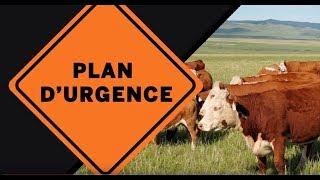Stratégie d'intervention en cas de perturbation des marchés du bétail