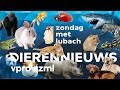 Animal news zondag met lubach s09 mp3