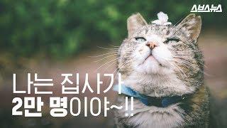 국민대학교 학생들의 흔한 지각사유서  국민대 고양이 국…