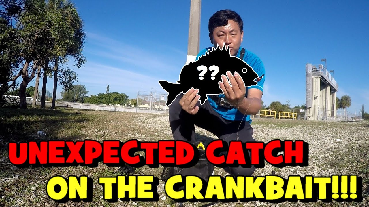 UNEXPECTED CATCH (?!) on the EUROTACKLE Z-CRANKER!!! (FL Brackish Canal)