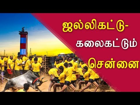 Jallikattu in Chennai from January 7 tamil live news, tamil news today, tamil, tamil news, redpix