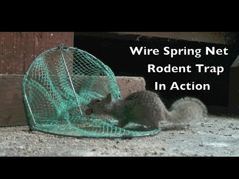 Wire Spring Net Rodent Trap In Action. MAJOR FAIL.