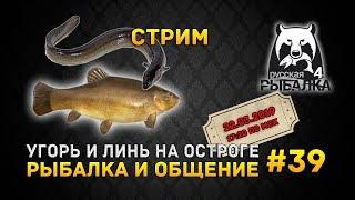Стрим Русская Рыбалка 4 #39 - Угорь и Линь на Остроге. Рыбалка и Общение (Russian Fishing 4)