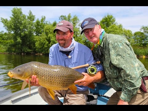 Carp on a Fly   Bay of Quinte