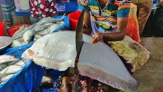 Fastest Fish Cutting Skill | Live Chitol Fish Cutting | New System Fish Cutting Market