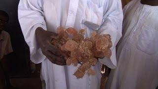 Gum Arabic: Sudan