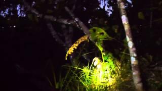 Caiman Encounter: Night Canoe Ride, the Amazon, Ecuador