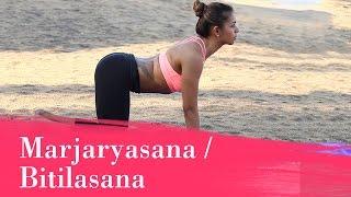 Yoga Asana - Marjaryasana/Bitilasana (Cat & Cow Pose) - Stretches the Back & Neck