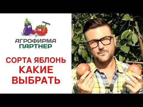 СОРТА ЯБЛОНЬ. КАКИЕ ВЫБРАТЬ? | садоводство | фруктовый | омолодить | плодовые | описание | деревья | яблоня | яблонь | яблони | яблоко