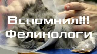 Колтуны у кошек. Как вычесать кошку во время линьки.