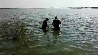 Рибалка на коропа мережею