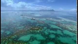 BBC | H.Planet: Okyanuslar - Okyanusun Ortasında Yaşam