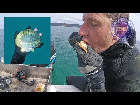 First Day Of Scallop Season In NZ - Catch & Cook