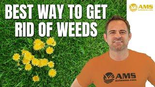 Best Way To Get Rid Of Weeds In Phoenix