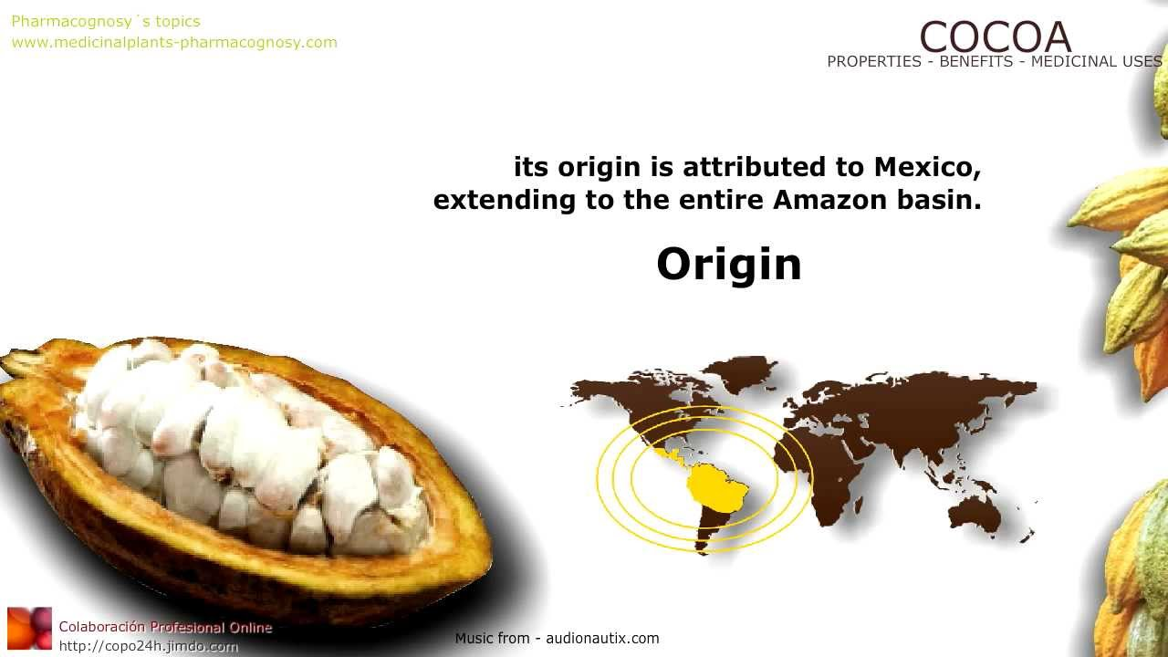 Cocoa Benefits Cacao Properties And Medicinal Uses Of Cocoa Tree Leaves Fruit And Beans Youtube