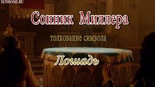 видео Сонник: белая лошадь