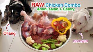 Pit Bulls eat RAW Chicken combo&mini salad+celery [ASMR] | BARF | M...