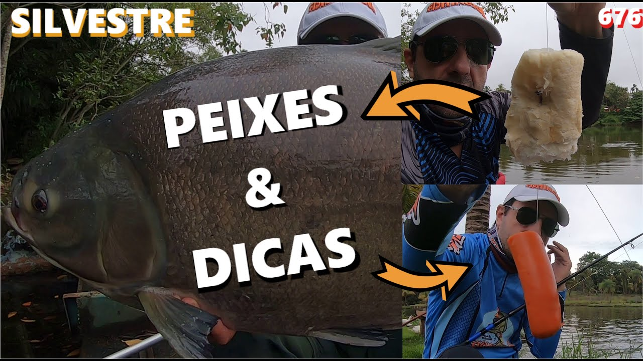 Dicas de Pesca e Peixes no Silvestre - Fishingtur na TV 676
