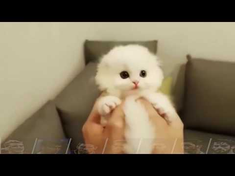 Cute Cat is not enough
