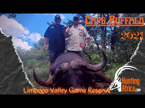 Cape Buffalo Hunting | Limpopo | 2021