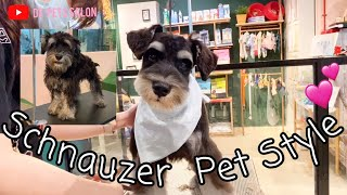 Schnauzer pet style dog grooming