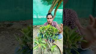 Blue berry plant , grow at home