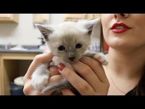 Double Splenectomy! | Veterinary Vlog#21