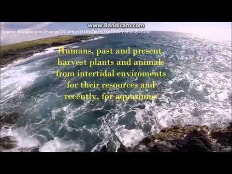 Top 5 Facts about the Intertidal Zone Biome