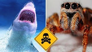 Top 10 Most Dangerous Predators On Earth - Part 2 Vlog#21 by HooplakidzLab