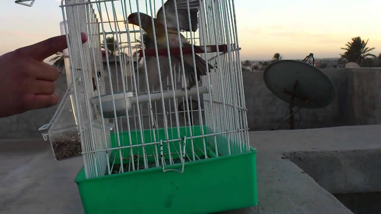 1ea4cb0c7 جغل 2012\5\ انتاجى ليبيا سوق الجمعه - YouTube