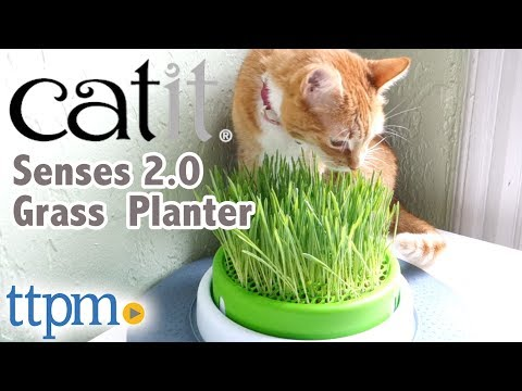 Senses 2 0 Grass Planter From Catit Youtube
