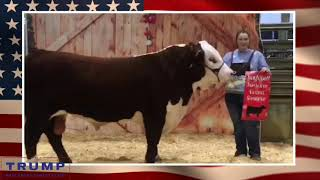 💥SHOWDOWN💥Jiggle Bell 🔔 Jamboree Livestock Show
